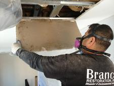 mold company in nyc, mold removal long island