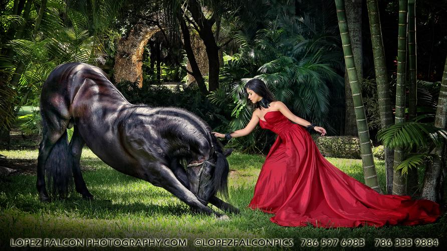 QUINCES PHOTOGRAPHY WITH BLACK HORSE IN MIAMI QUINCEANERA SWEET 15