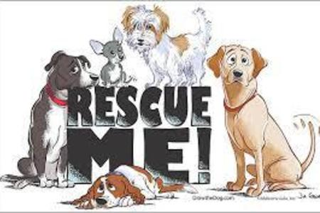 da4e4490 Our mission is simple: Lil' Paw Prints Animal Rescue ...