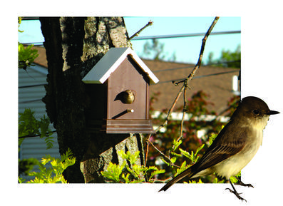 How to build a easy DIY Trex and PVC weather proof birdhouse. www.DIYeasycrafts.com