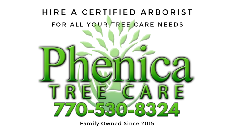 Phenica Tree Care - Gwinnett County Tree Service, Removal, Trimming