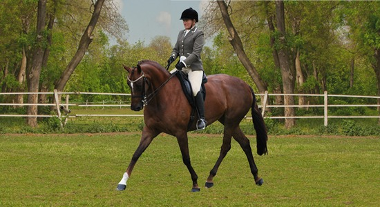Classical Dressage Lessons, Horse Riding - Winmallee Classical