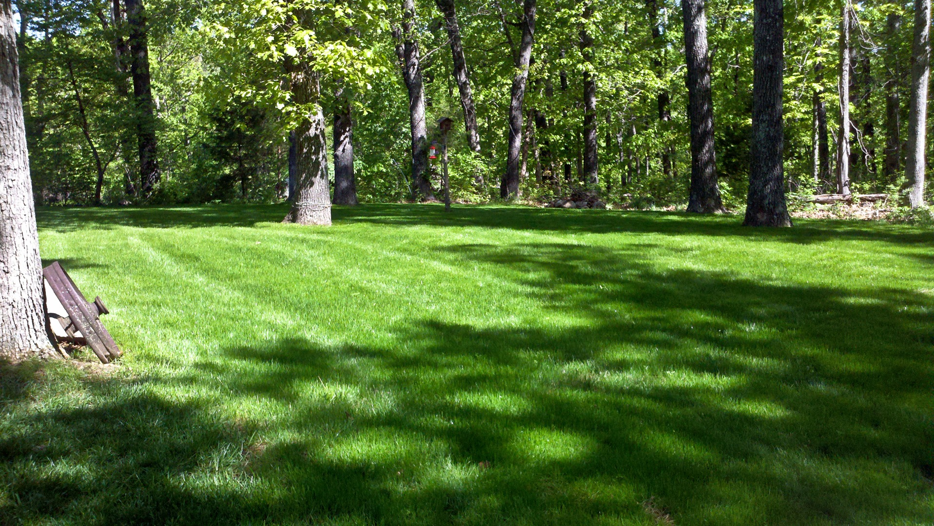 New Lawn Care Springfield Mo