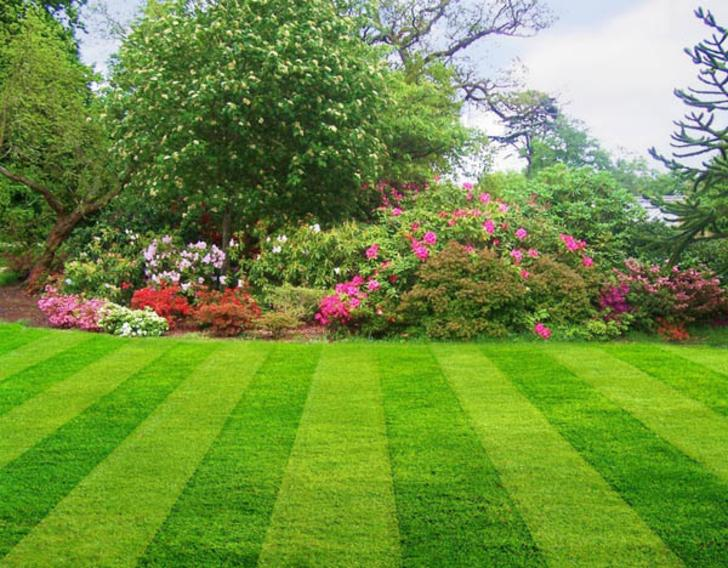Leading Lawn Maintenance Specialist Service in Edinburg Mission McAllen TX | RGV Household Services