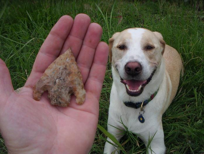 Arrowheads and the Law
