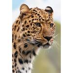 Wild Cats Beauty
