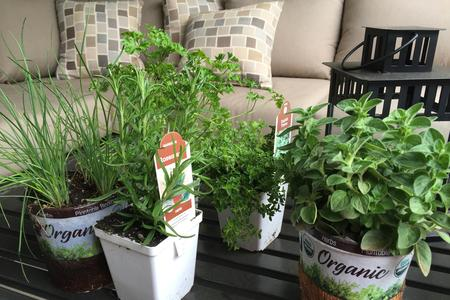 build a potted herb garden