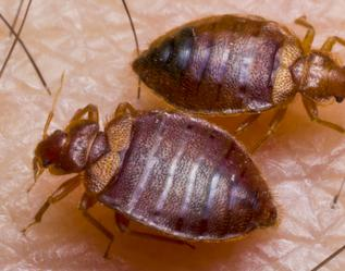Coppes Pest Management-Bed Bugs