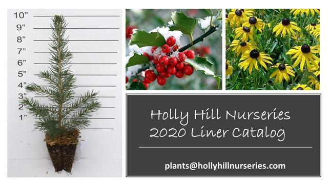 2020 Holly Hill Nurseries Catalog