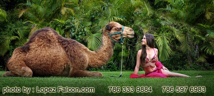 Arabian Nights Quinceanera with Camel Photo Shoot MiamiTheme Moroccan Quinces