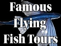 Catalina Flying Fish Tours