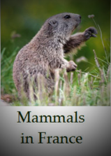 Animals-mammals-found-in-France