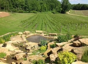 Vineyard Wedding Venue