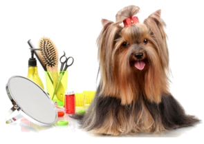 Dog Grooming School Pet Grooming School Miami Golden Paws Miami Fl