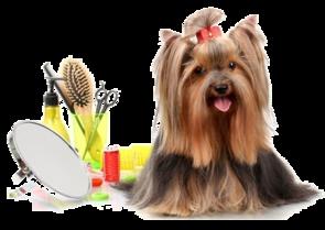 Dog Grooming School Pet Grooming School Miami Golden Paws Miami Fl