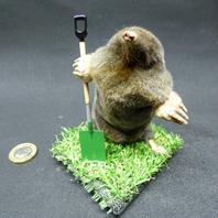 Adrian Johnstone, Professional Taxidermist since 1981. Supplier to private collectors, schools, museums, businesses and the entertainment world. Taxidermy is highly collectable. A taxidermy stuffed Gardening Mole (44), in excellent condition.