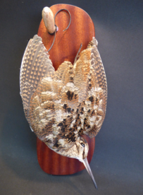 Adrian Johnstone, professional Taxidermist since 1981. Supplier to private collectors, schools, museums, businesses, and the entertainment world. Taxidermy is highly collectable. A taxidermy stuffed adult Woodcock (9583), in excellent condition.