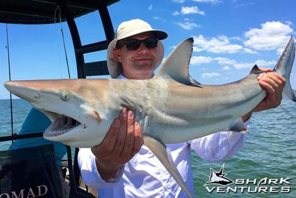 Shark Charter for Blacktip Sharks