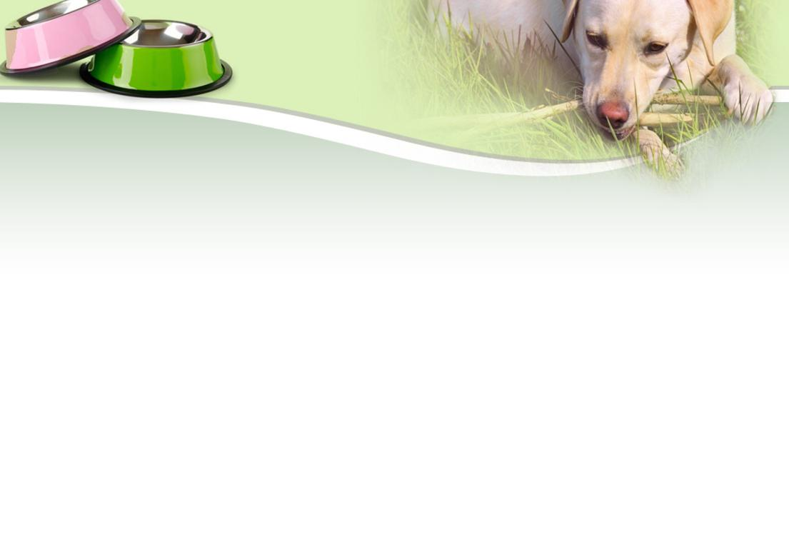 Pet Products - Fish Antibiotics and other pet supplies