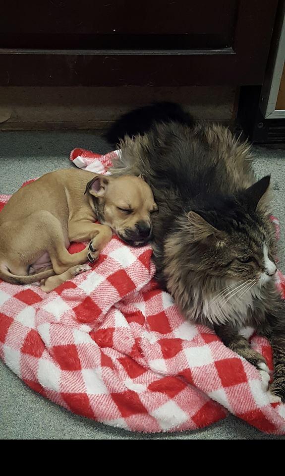 Pet Adoption In Niagara County Adopt A Dog Or Cat Niagara Spca