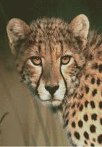 Cross Stitch Chart Pattern of a Cheetah