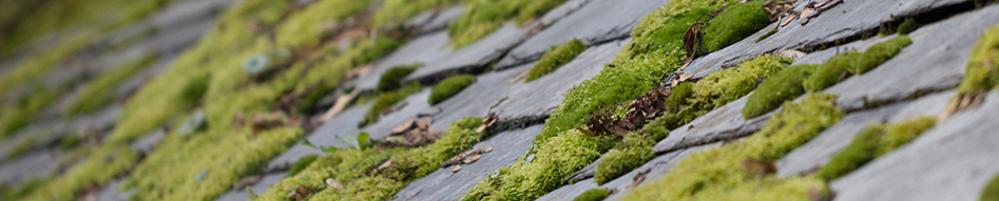 Portland Roof Moss Removal, Portland roof Cleaning, Moss removal