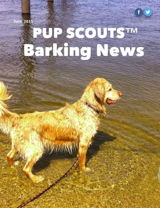 Pupscout ,members,news,magazine