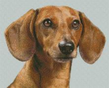 Cross Stitch Chart of a Sandy Dachshund