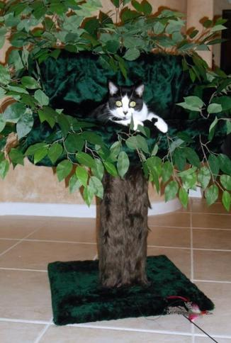 Cat Tree Bed
