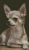 Cross Stitch Chart of a chihuahua looking to his right
