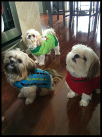 Cute Puppies in Sweaters