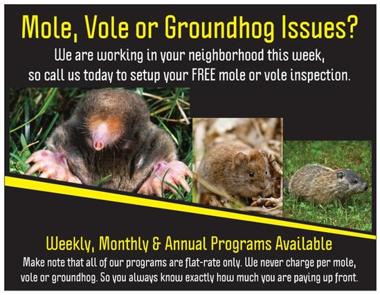 Mole and Vole Free Inspection
