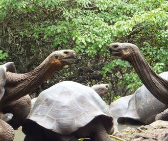 Giant tortoises at La Galapaguera