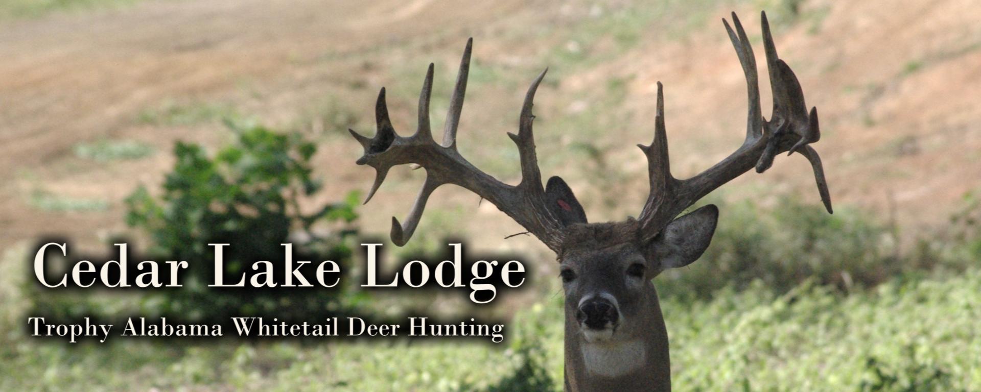 Cedar Lake Lodge Trophy Deer Hunting