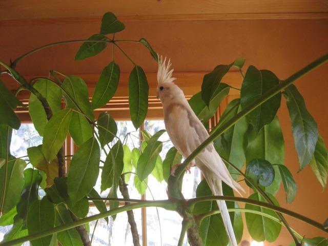 Using Neem Leaf for Birds