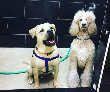 Grooming our lees hill location has a huge walk in tub for senior dogs and dogs that cannot get into a standard grooming tub solutioingenieria Image collections