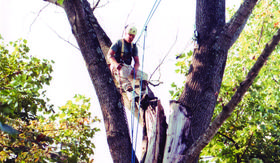 Tree Work, Tree Trimming and Tree Removal by Dogwood Landscape of the Tri Cities