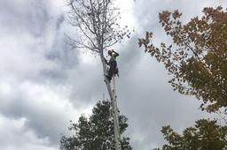 arborist, arbor, tree, cutting, removal