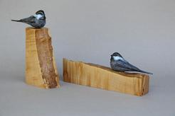 Chickadee sitting on a piece of live edge maple