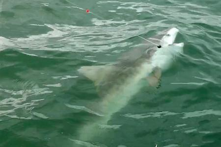 Shark Fishing Charter Crystal River Florida