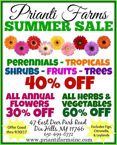 Prianti Plant Shrub Tree Summer Sale Specials