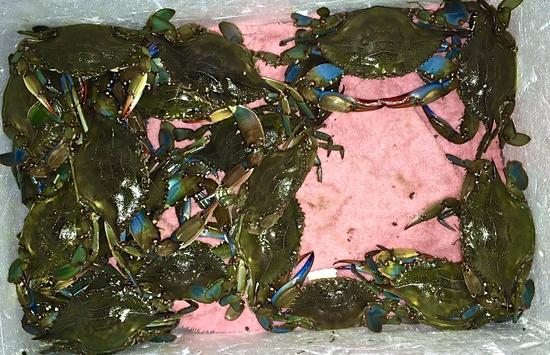 Cooler of Blue Crabs