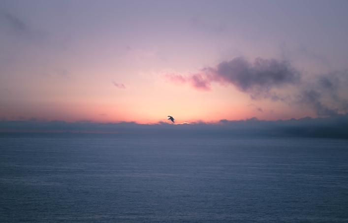 flying bird over ocean pink sunset