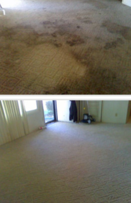 green rhino carpet cleaning results