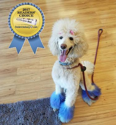 Grooming welcome to dog krazy grooming solutioingenieria Image collections