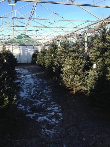 Christmas Trees Lansing MI