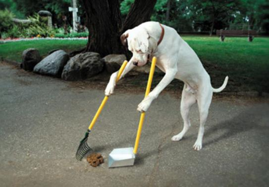 Local Pet Cleanup Service in Edinburg Mission McAllen TX RGV Janitorial Services
