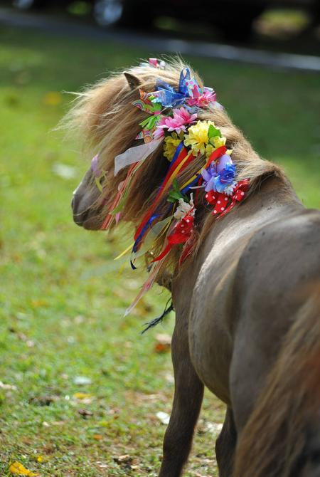 Duncan, our champagne colored mini horse, covered in bright primary colors