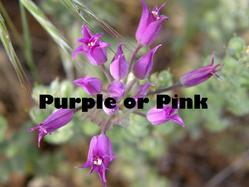 Link to Purple and Pink Flowers at Cedars page.