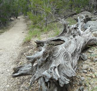 Photograph of log along trail